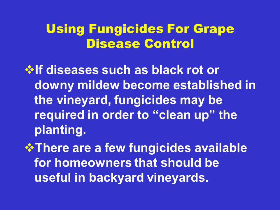 Using Fungicides For Grape Disease Control