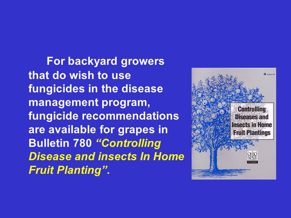For backyard growers that do wish to use fungicides in the disease management program, fungicide recommendations are available for grapes in Bulletin 780 Controlling Disease and insects In Home Fruit Planting .