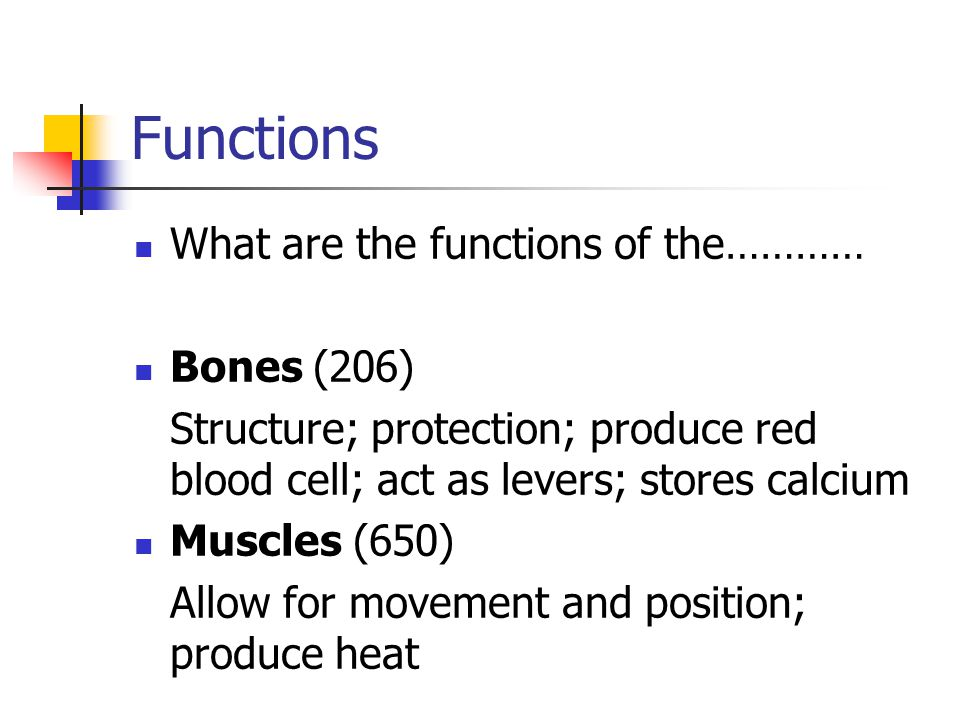 Functions What are the functions of the………… Bones (206)