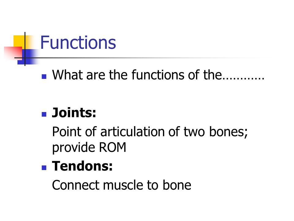 Functions What are the functions of the………… Joints: