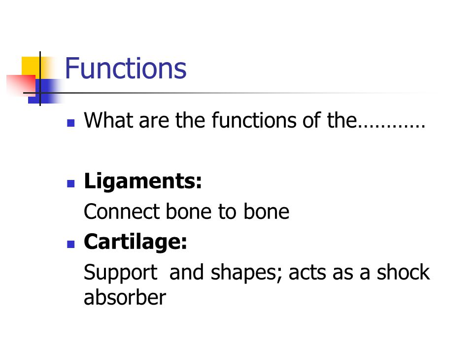 Functions What are the functions of the………… Ligaments: