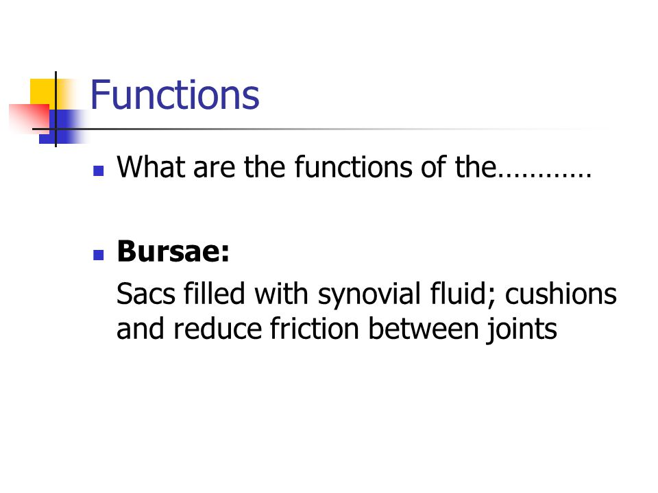 Functions What are the functions of the………… Bursae: