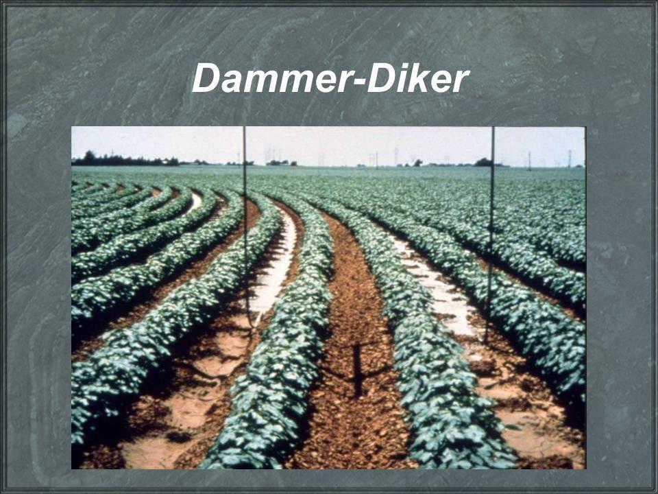 Dammer-Diker