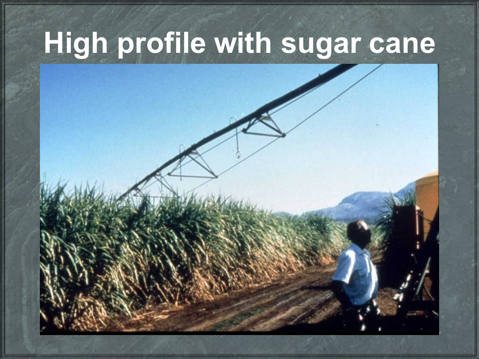 High profile with sugar cane
