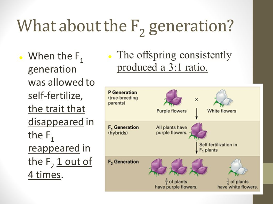 What about the F2 generation