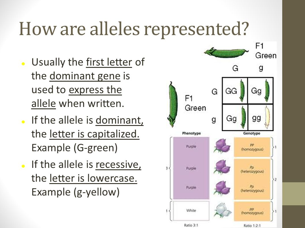 How are alleles represented