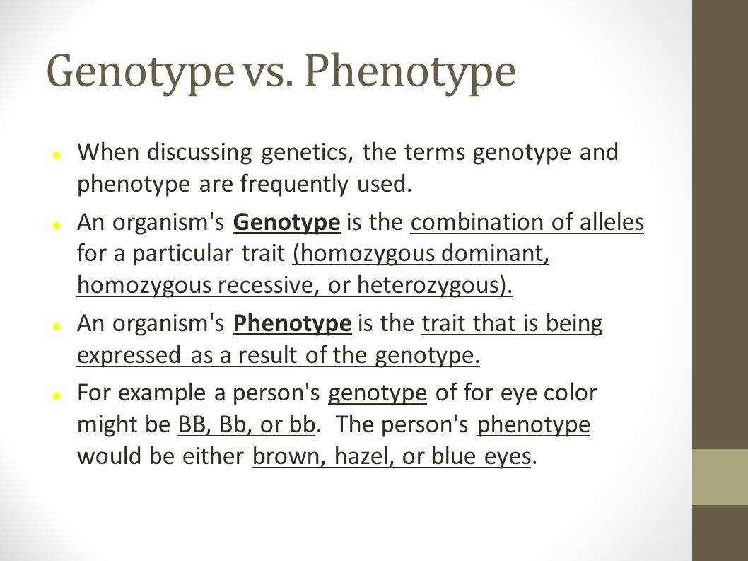 Genotype vs. Phenotype When discussing genetics, the terms genotype and phenotype are frequently used.