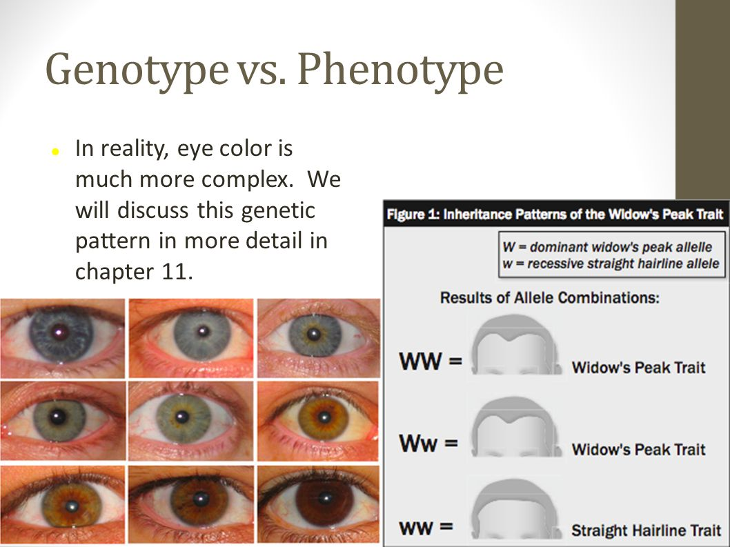 Genotype vs. Phenotype In reality, eye color is much more complex.