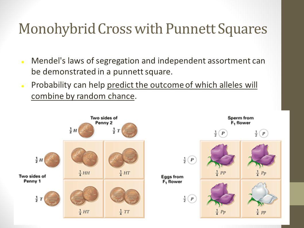 Monohybrid Cross with Punnett Squares