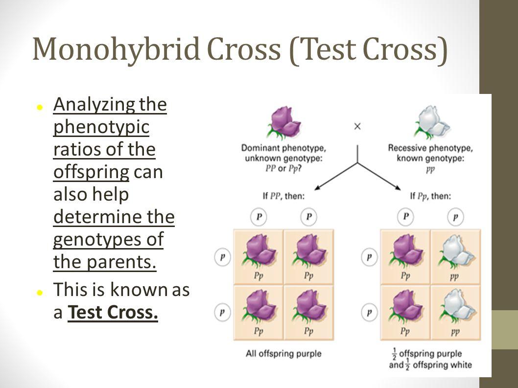 Monohybrid Cross (Test Cross)