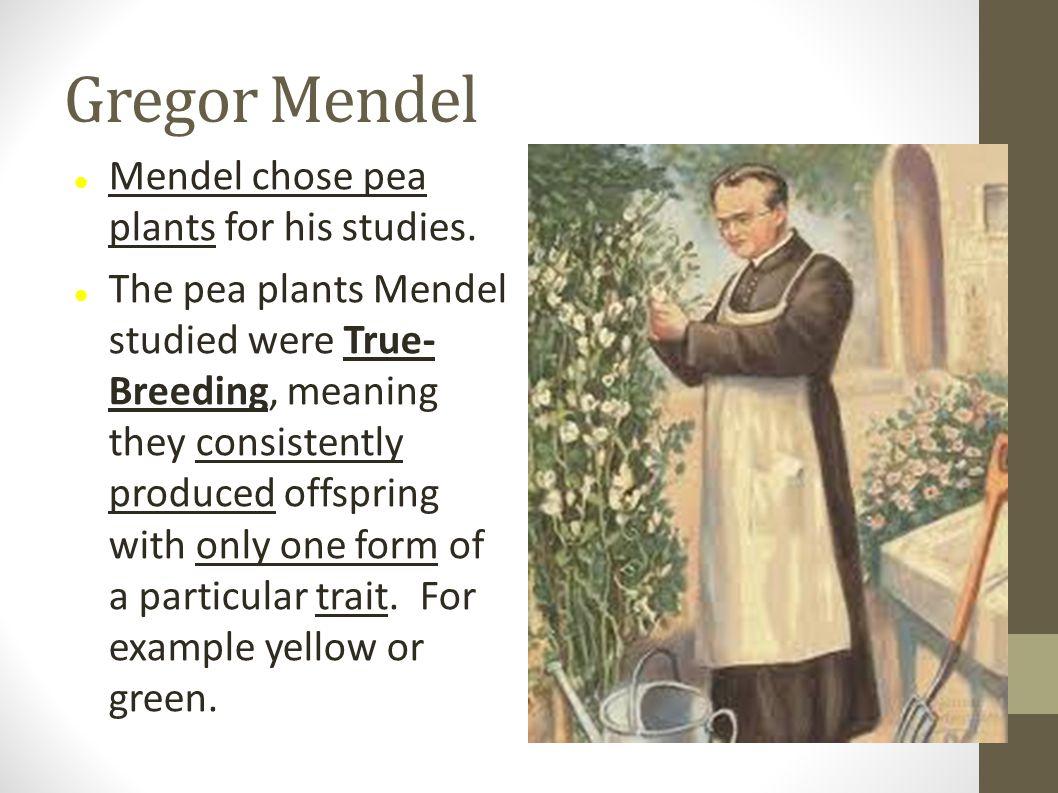 Gregor Mendel Mendel chose pea plants for his studies.