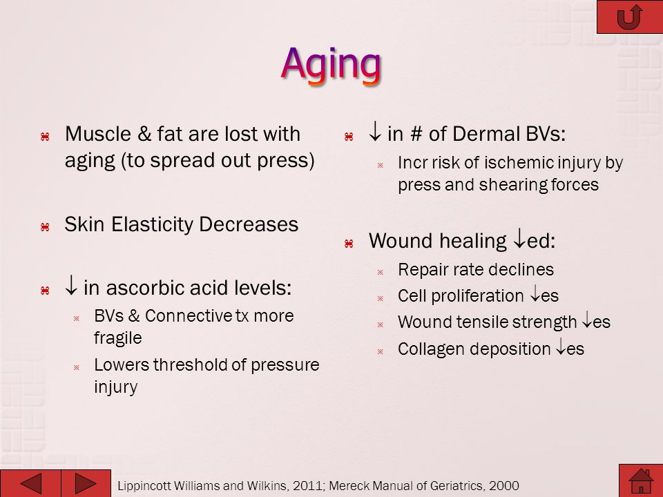 Aging Muscle & fat are lost with aging (to spread out press)