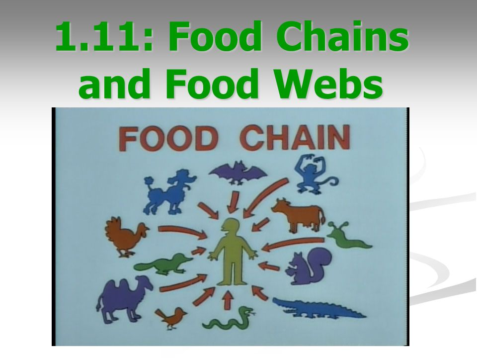 1.11: Food Chains and Food Webs