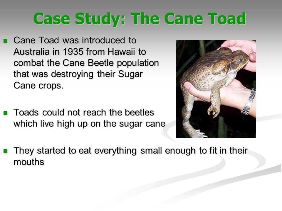 Case Study: The Cane Toad