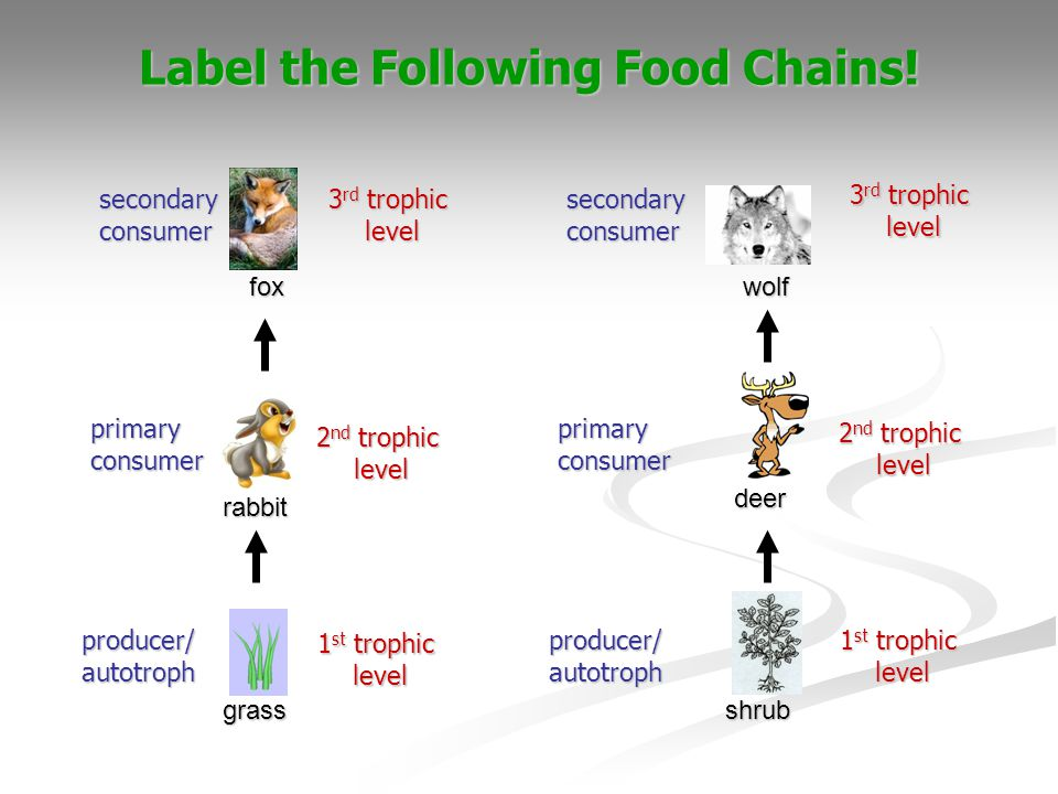 Label the Following Food Chains!