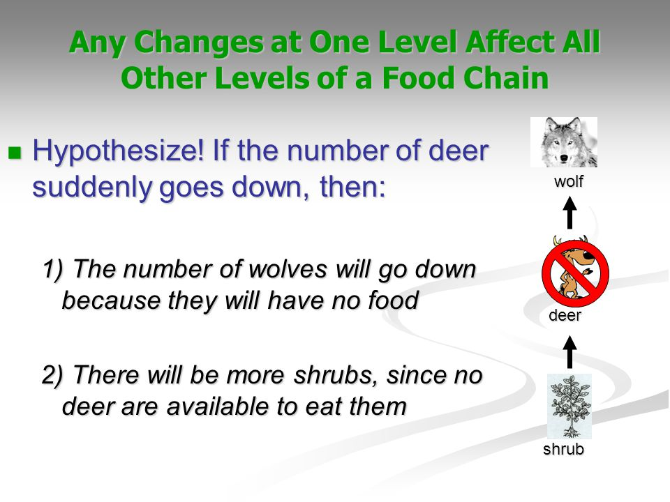 Any Changes at One Level Affect All Other Levels of a Food Chain