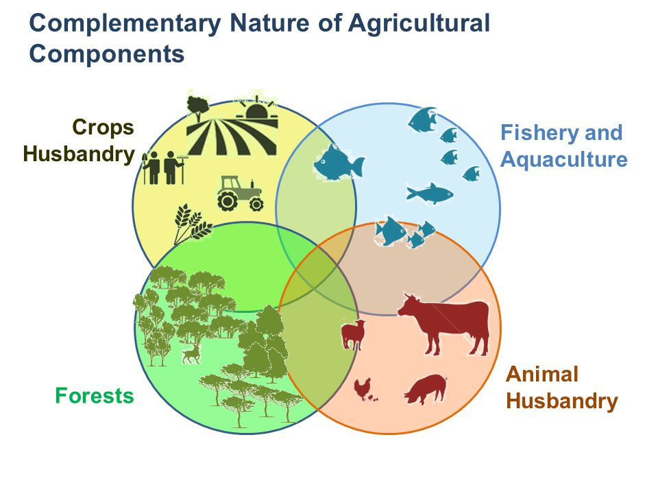 Complementary Nature of Agricultural Components