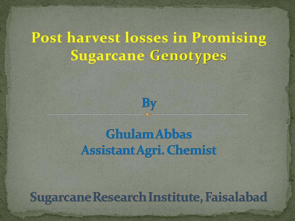 Post harvest losses in Promising Sugarcane Genotypes
