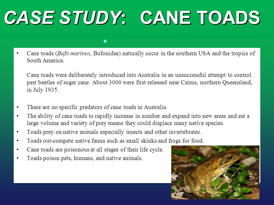 CASE STUDY: CANE TOADS
