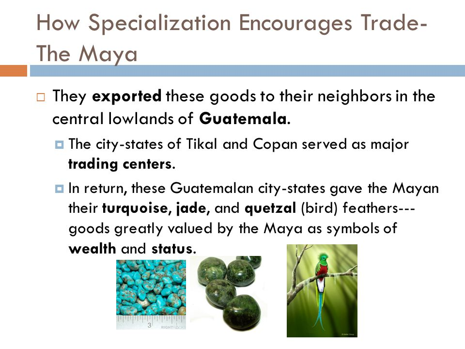 How Specialization Encourages Trade- The Maya