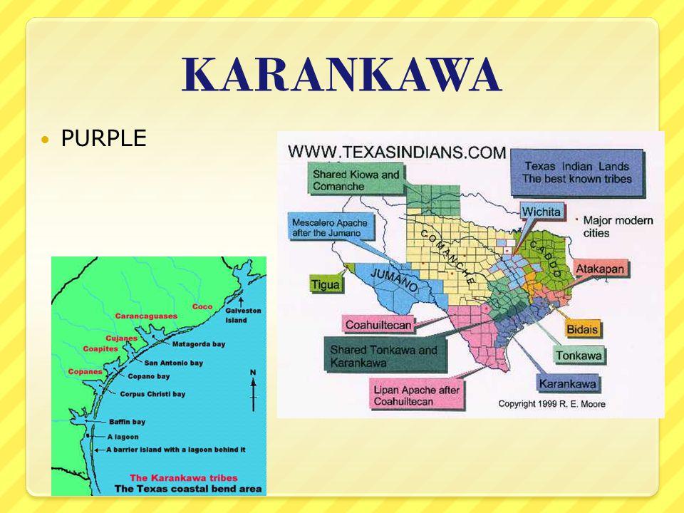 KARANKAWA PURPLE