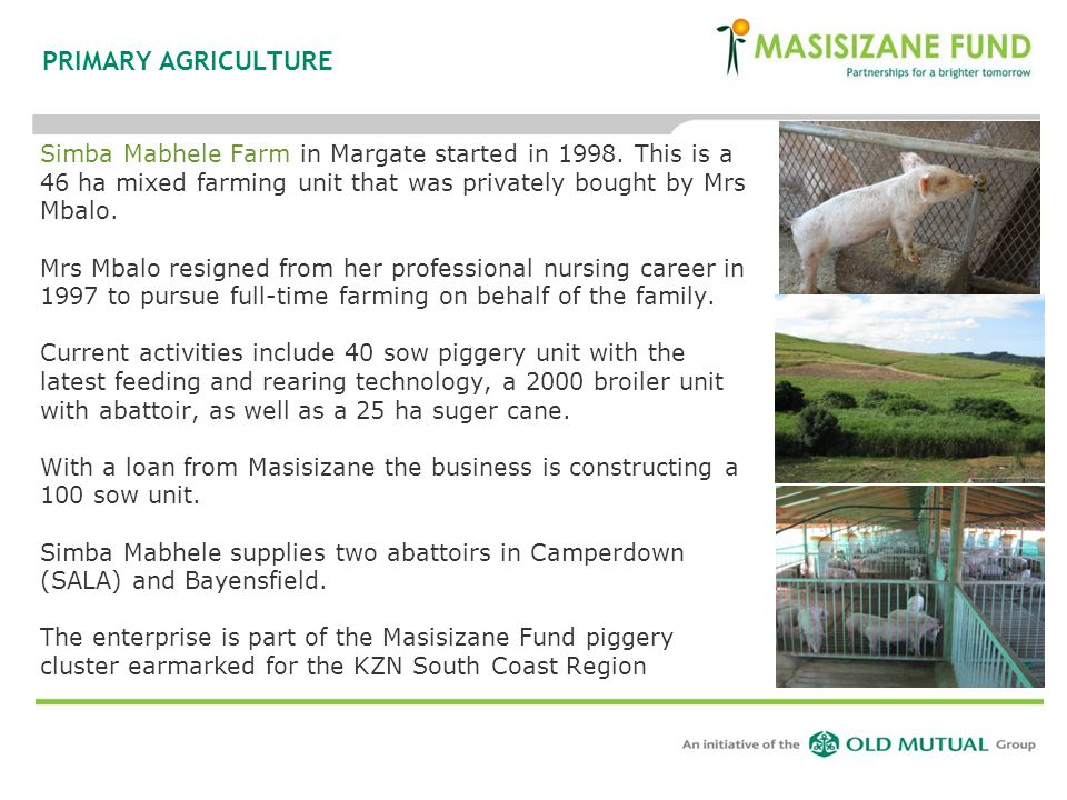PRIMARY AGRICULTURE Simba Mabhele Farm in Margate started in 1998. This is a 46 ha mixed farming unit that was privately bought by Mrs Mbalo.