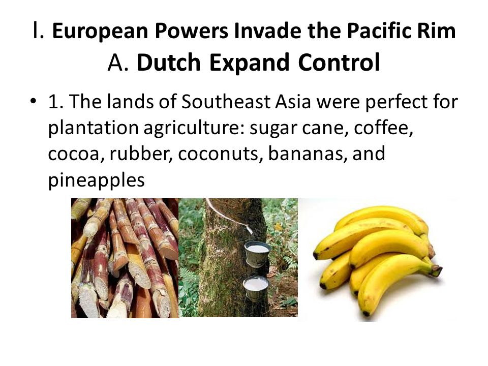 I. European Powers Invade the Pacific Rim A. Dutch Expand Control