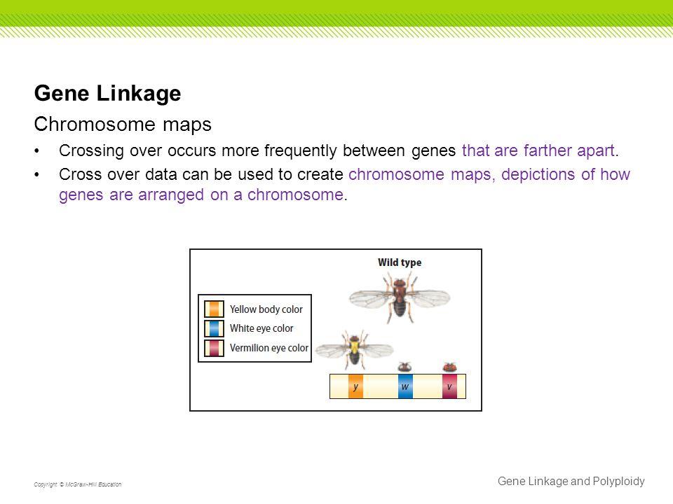 Gene Linkage Chromosome maps
