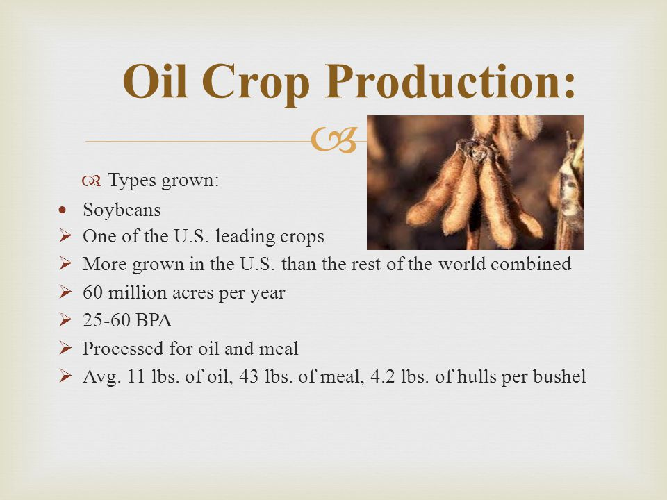 Oil Crop Production: Types grown: Soybeans