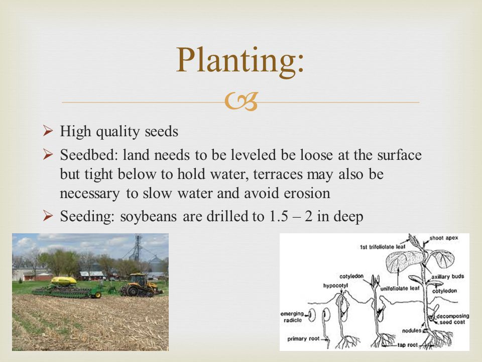Planting: High quality seeds