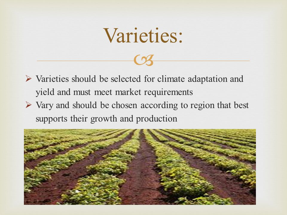 Varieties: Varieties should be selected for climate adaptation and yield and must meet market requirements.
