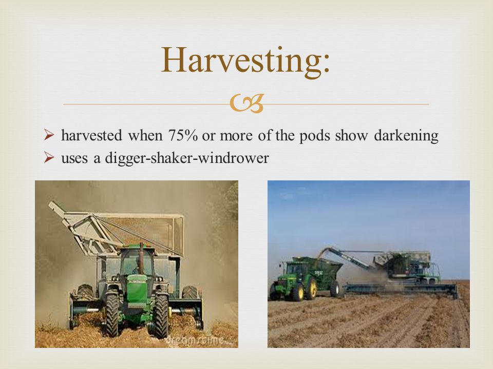 Harvesting: harvested when 75% or more of the pods show darkening