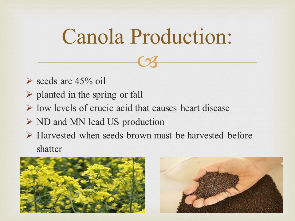 Canola Production: seeds are 45% oil planted in the spring or fall