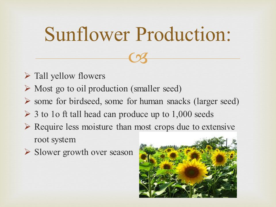 Sunflower Production: