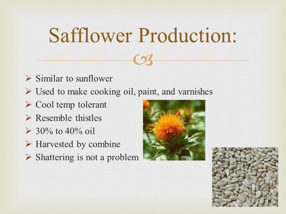Safflower Production: