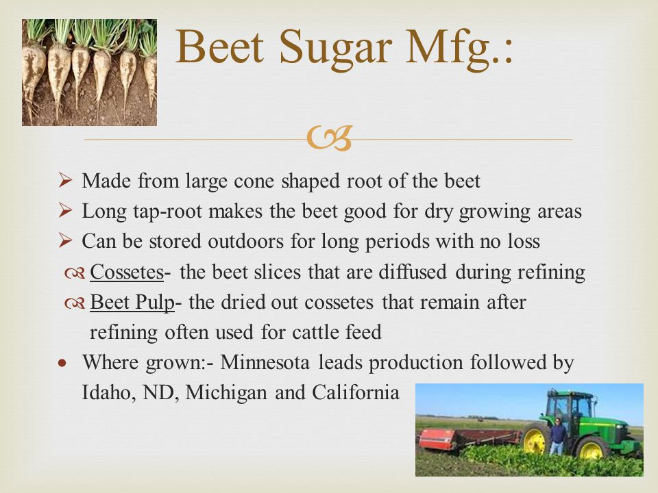 Beet Sugar Mfg.: Made from large cone shaped root of the beet
