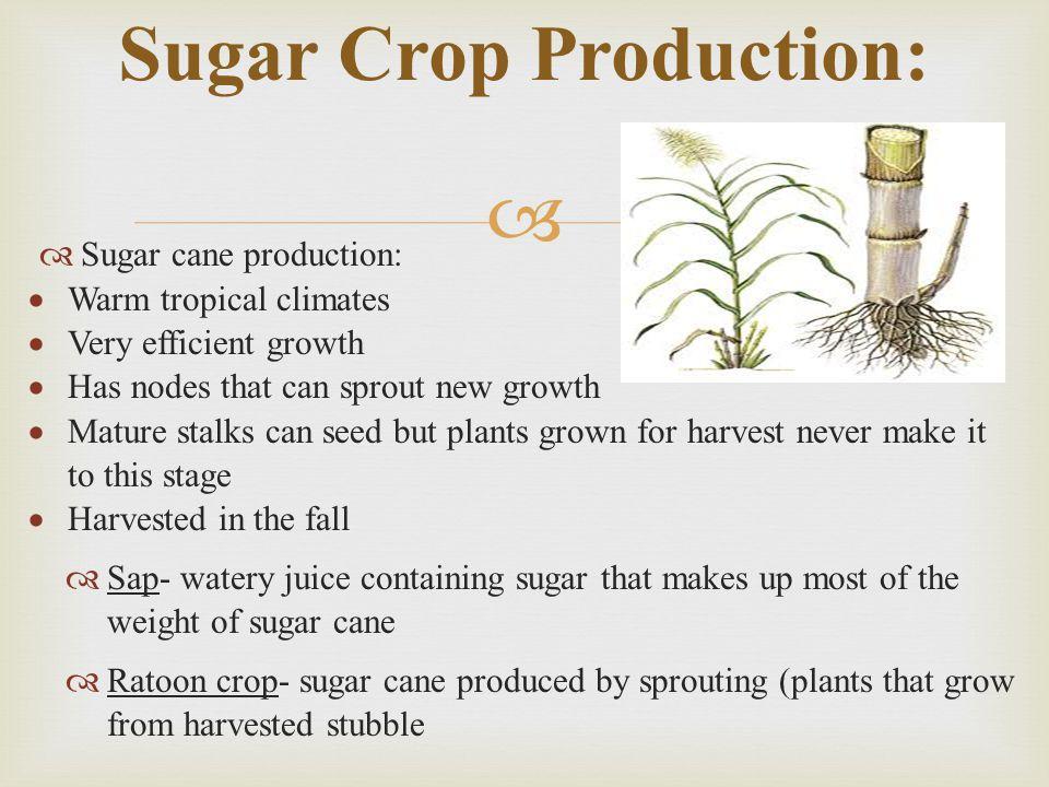 Sugar Crop Production: