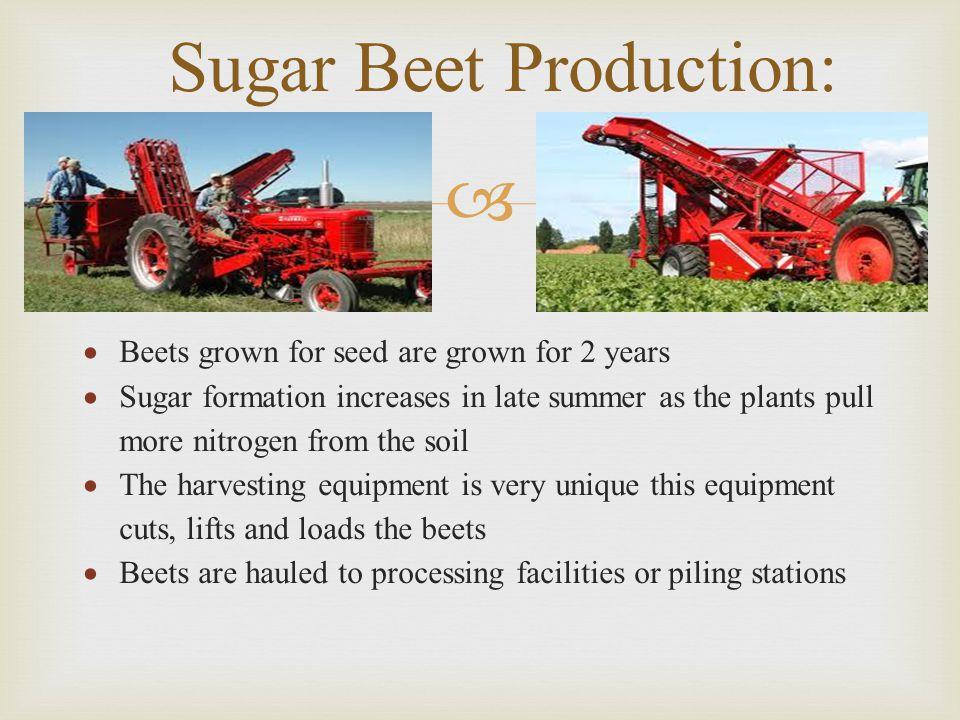 Sugar Beet Production: