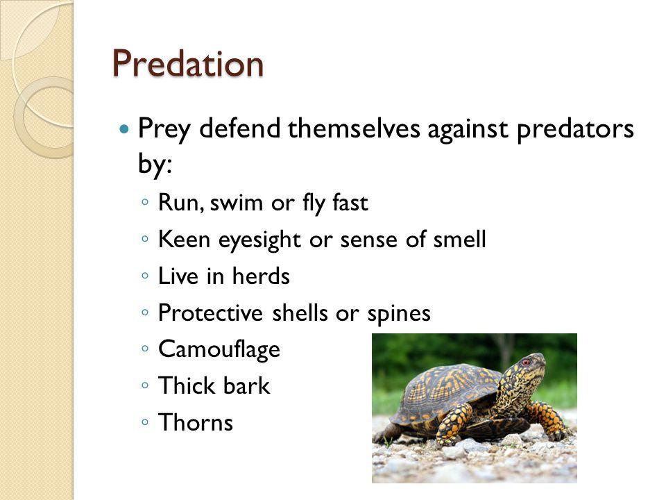 Predation Prey defend themselves against predators by: