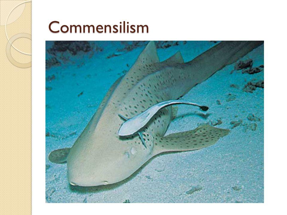 Commensilism