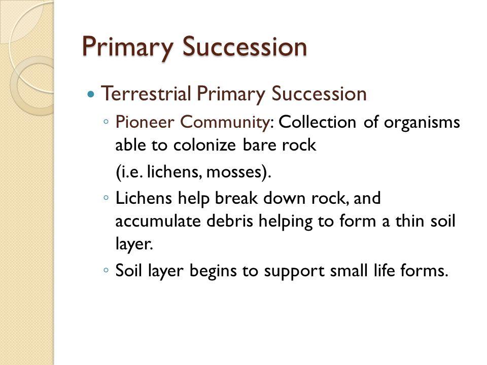 Primary Succession Terrestrial Primary Succession