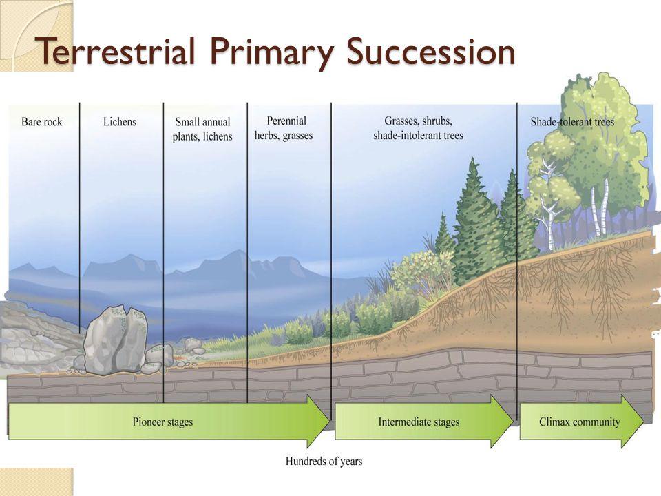 Terrestrial Primary Succession