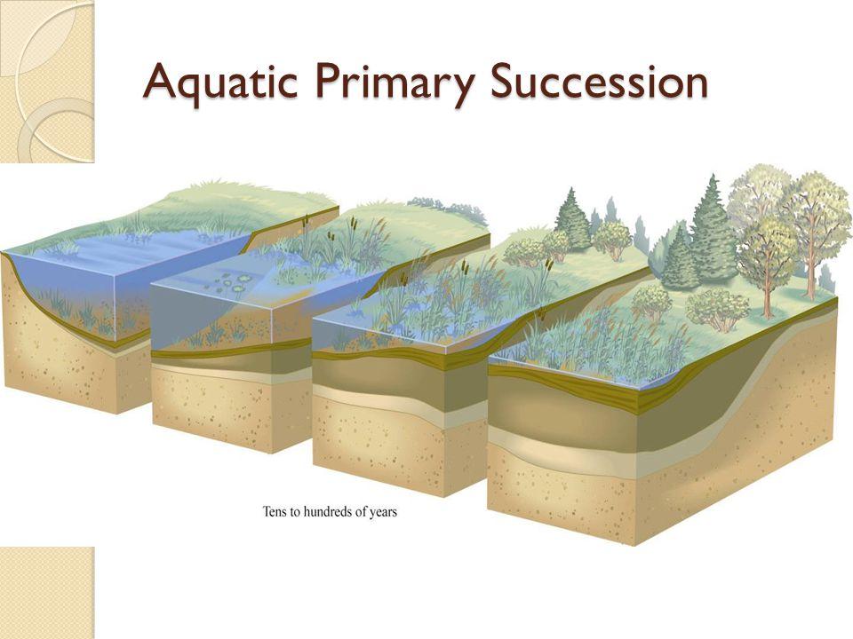 Aquatic Primary Succession