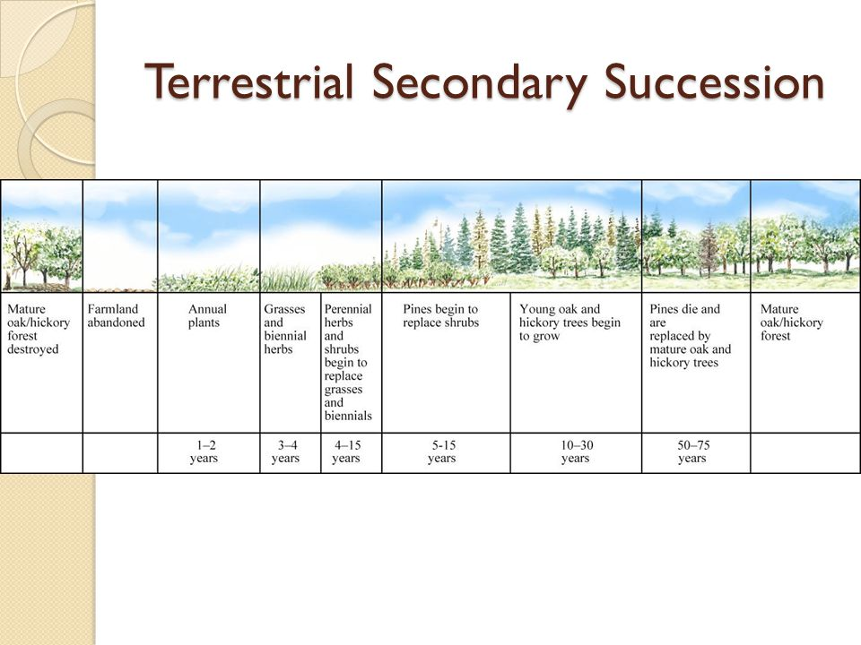 Terrestrial Secondary Succession