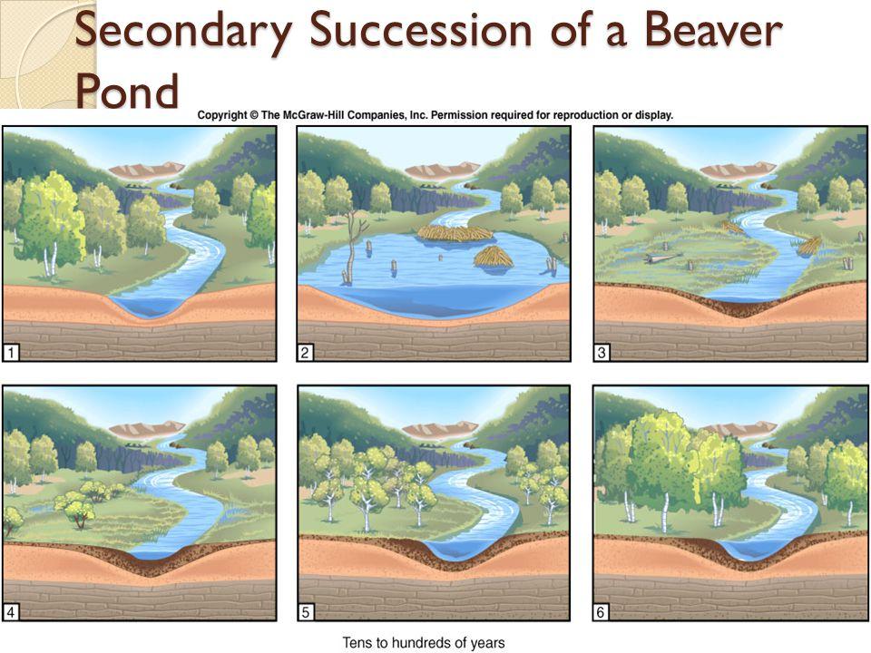 Secondary Succession of a Beaver Pond
