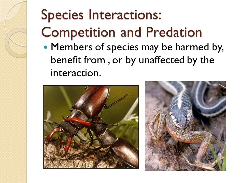 Species Interactions: Competition and Predation