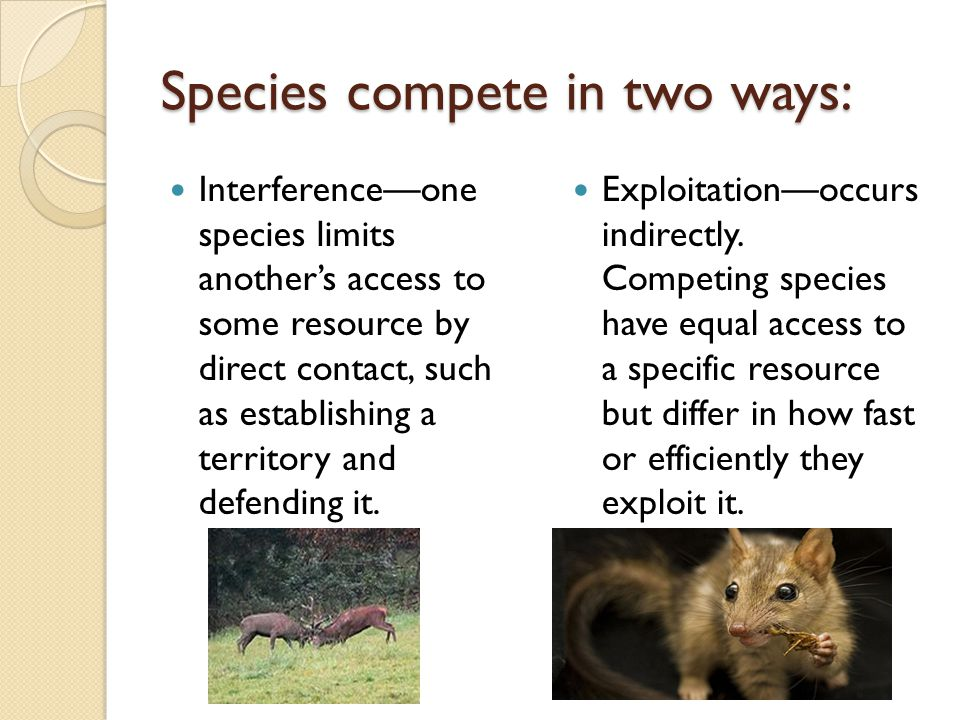 Species compete in two ways: