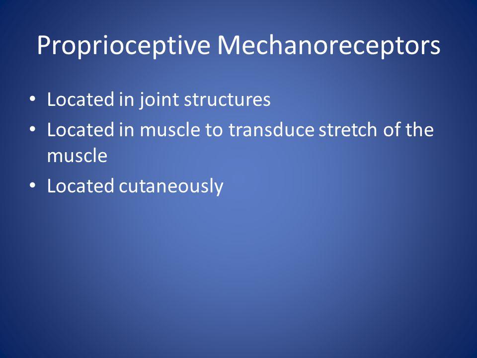 Proprioceptive Mechanoreceptors