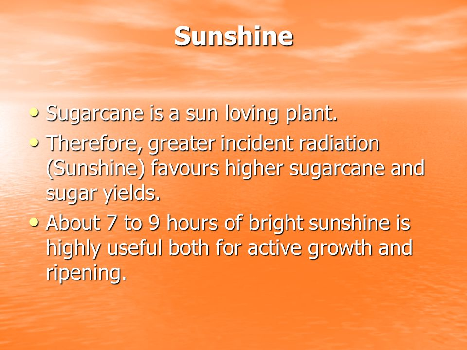 Sunshine Sugarcane is a sun loving plant.