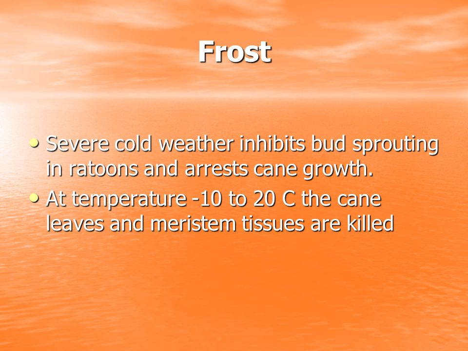 Frost Severe cold weather inhibits bud sprouting in ratoons and arrests cane growth.